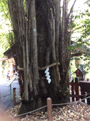 相生の杉(御神木)