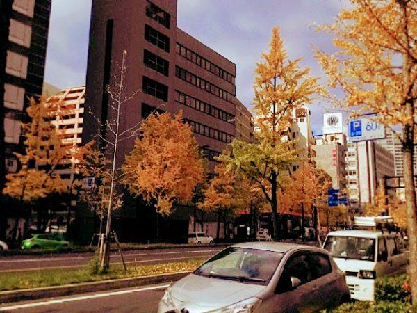 大阪の御堂筋はイチョウの木がたくさん植えられているので人気のスポットです。