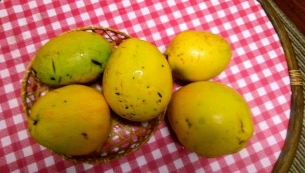 花梨(かりん)を5玉